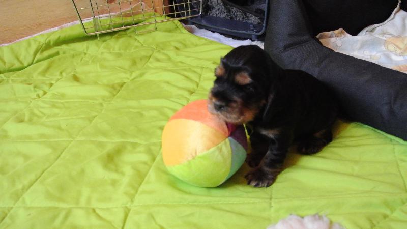 Bella spielt Ball