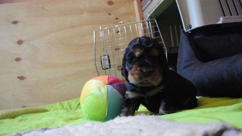 Bella und der Ball
